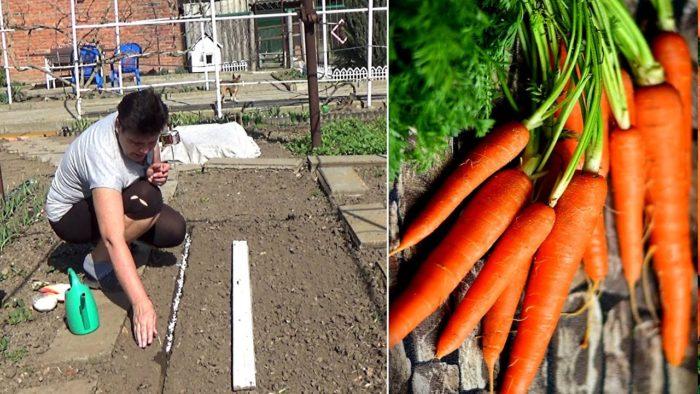 Самые благоприятные дни для посадки моркови в апреле 2021 года по луне