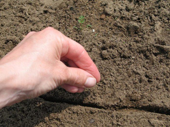 Главные требования к почве