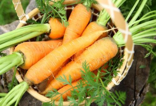 Главные признаки зрелости моркови