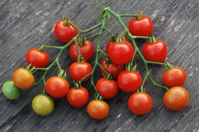 Сорта помидоров для теплиц в Подмосковье на 2021 год