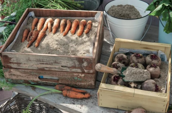 kak hranit morkov