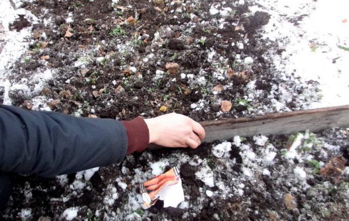 Самые благоприятные дни для посева моркови под зиму по фазам луны в 2021 году