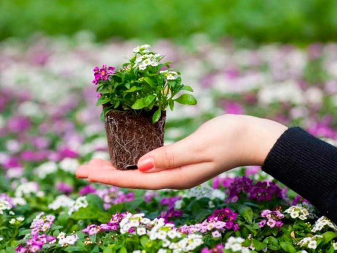 Самые благоприятные дни для посадки рассады цветов по лунному календарю в 2021 году
