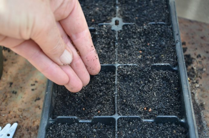Когда сажать капусту на рассаду по лунному календарю в 2021 году