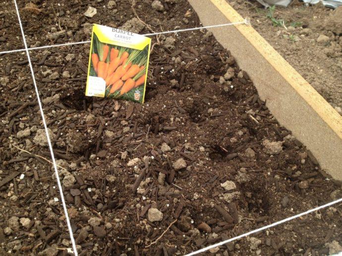 Сроки посадки моркови по лунному календарю в 2021 году