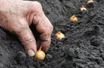 Самые благоприятные дни для посадки лука севка в 2021 году