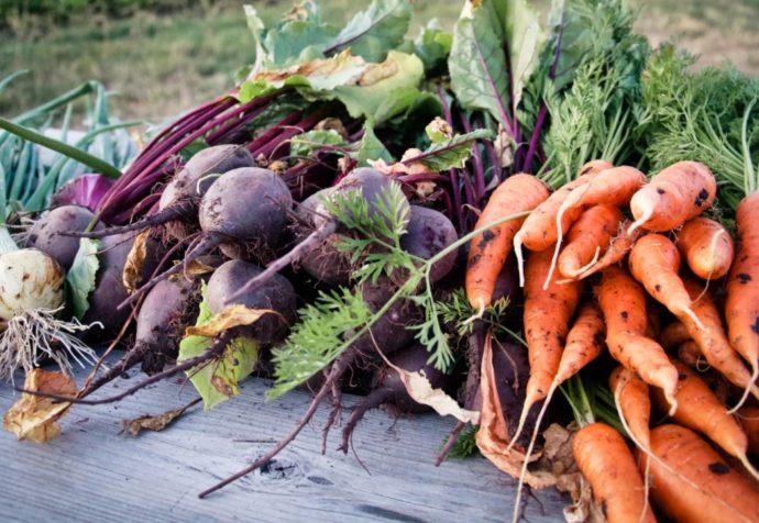 Самые благоприятные дни для уборки свеклы и моркови в Подмосковье в 2021 году по луне