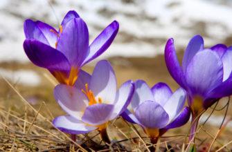 Когда она начнется весна и какой она будет в 2021 году
