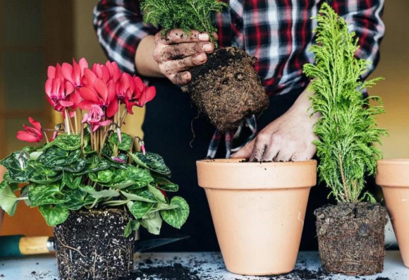 Благоприятные дни для пересадки комнатных растений по лунному календарю в 2021 году