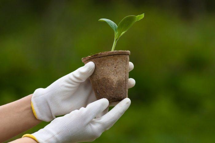 С учетом региона выращивания