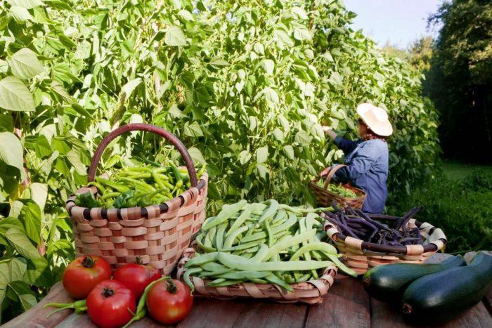 Для сбора урожая