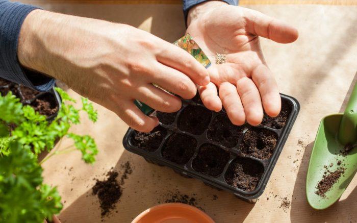 Благоприятные дни для садовода-огородника для Украины на 2021 год