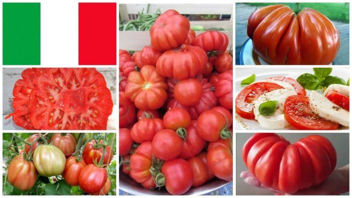 Самые лучшие томаты от коллекционеров на 2021 год
