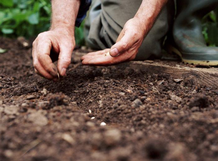 Какую почву использовать