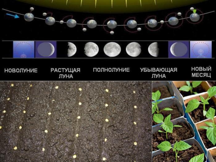 Сроки посадки рассады по лунному календарю в 2021 году