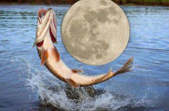 Дни для рыболова