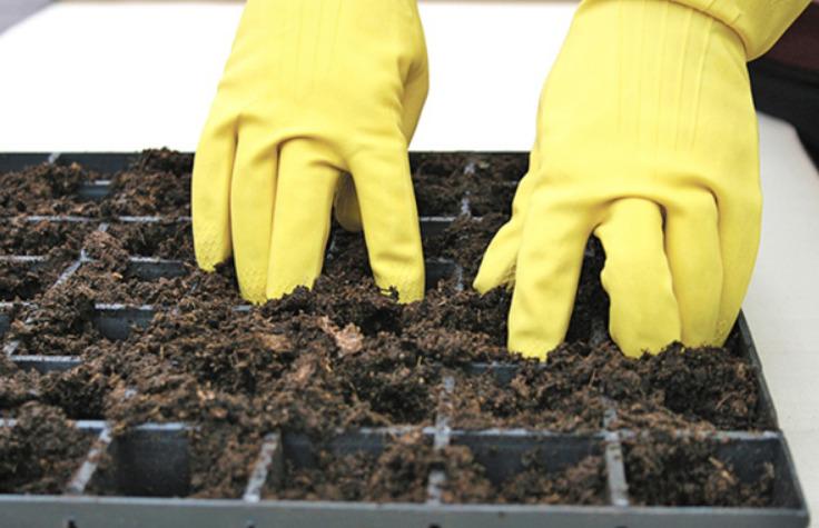 Какую почву предпочитает лобелия