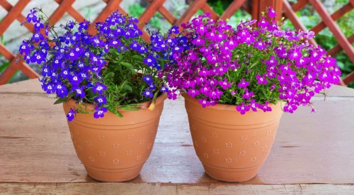 Особенности цветов