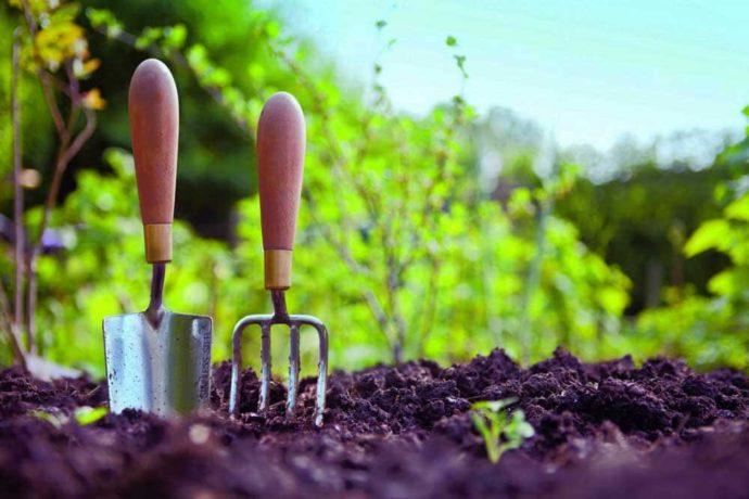 Благоприятные дни для посевных работ в июле в 2021 году