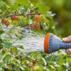 Весенняя обрезка и обработка крыжовника от болезней и вредителей в 2021 году