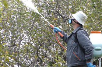 Когда и как обрабатывать абрикосы весной от болезней и вредителей в 2021 году