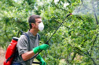 Когда и как обрабатывать сливу весной от болезней и вредителей в 2021 году