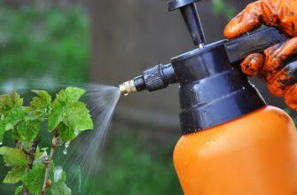 Как проводится обработка смородины весной от болезней и вредителей