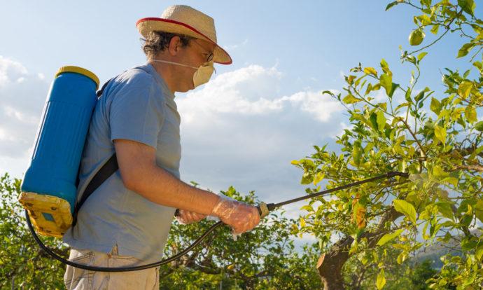 Когда и как обрабатывать грушу весной от болезней и вредителей в 2021 году