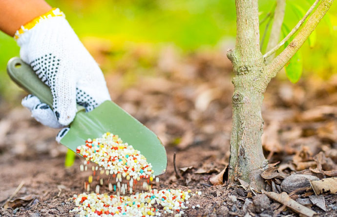 подкормка плодовых деревьев