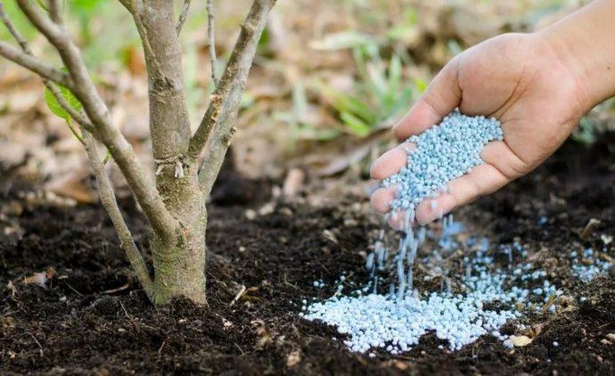 удобряем деревья
