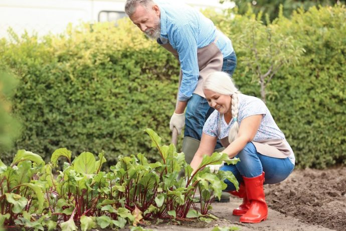 Благоприятные дни для работ в саду и огороде в сентябре 2021 года
