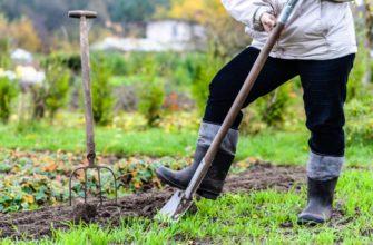 Самые благоприятные дни для работ в саду и в огороде в октябре 2021 года
