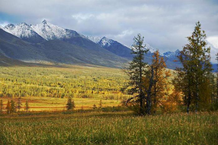 Посадка чеснока в зиму на Урале в 2021 году
