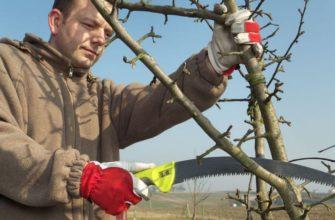 Правила обрезки колоновидных яблонь осенью для начинающих