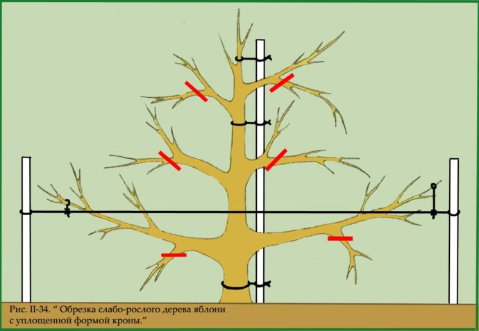 Обрезка плодовых деревьев осенью схема