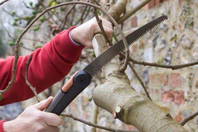 Обрезка плодовых деревьев яблонь