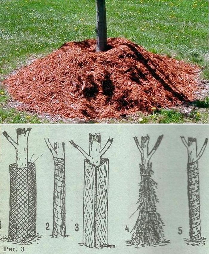 Укрытие корней деревьев на зиму