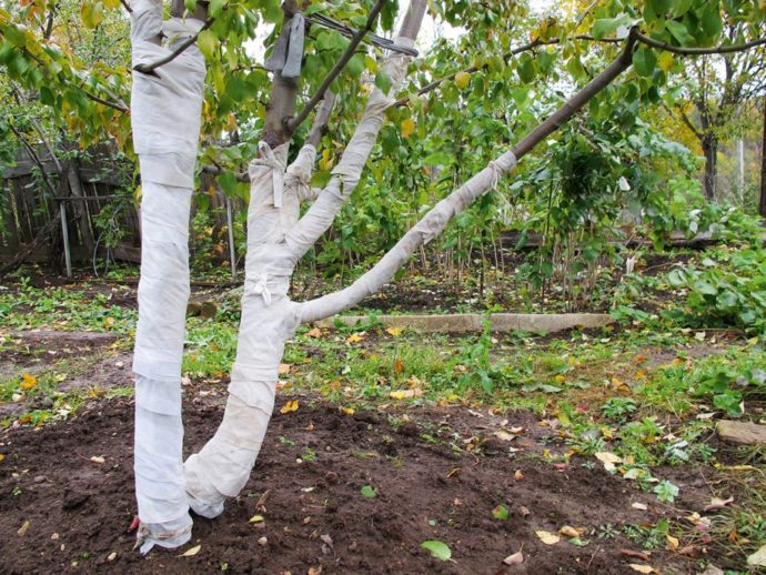 Укрытие стволов деревьев