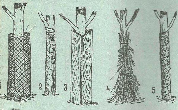 Укрытие стволов деревьев на зиму