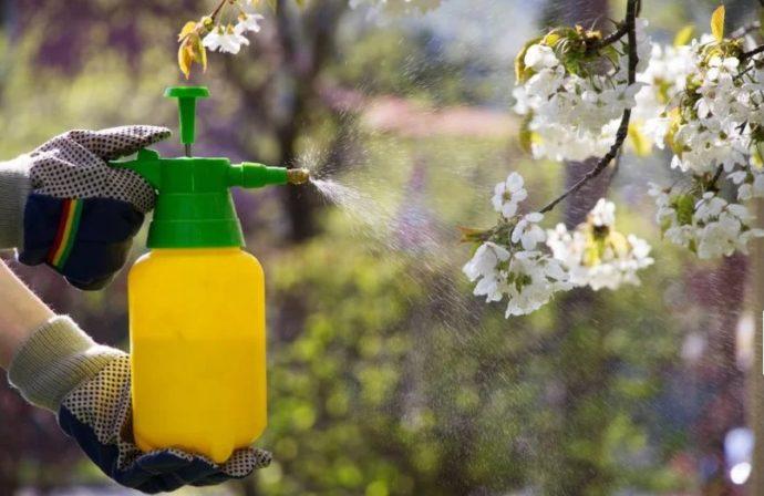 Когда и чем обработать яблоню весной от болезней и вредителей по регионам